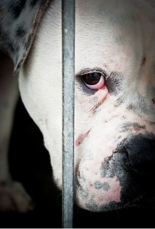 sad dog behind bars