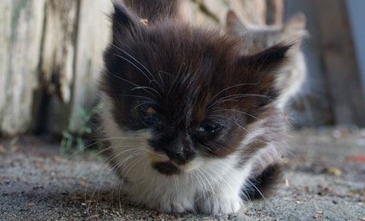 homeless kitten