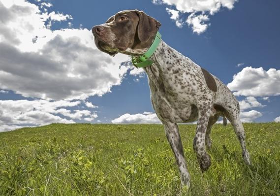 dog in grass field