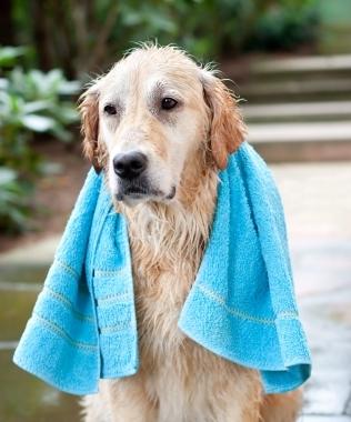 hot wet dog