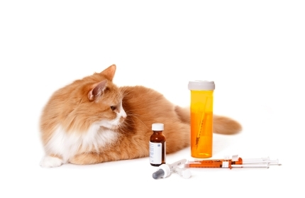 Cat And Its Medications