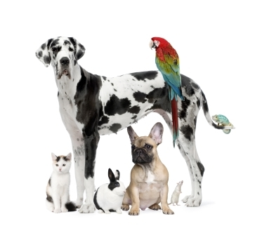 photo of various species of pets