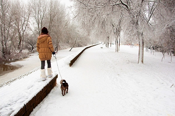 Walking A Dog In Snow