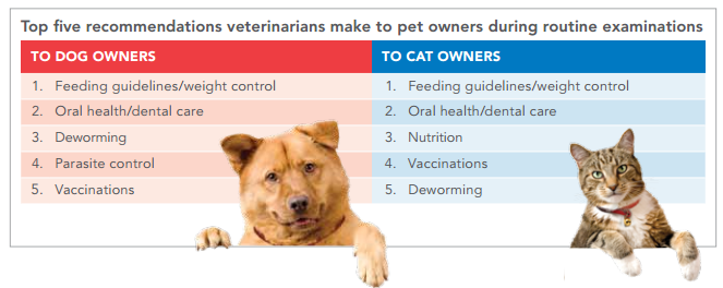 Top 5 Vet Recommendations