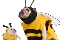 dogs in bee costumes