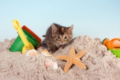 cat in summer on a beach