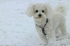 lost dog in the winter
